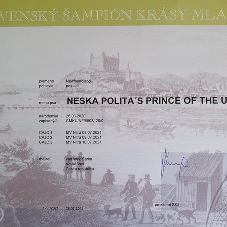 Neska Polita's Prince of the Universe - SK Junior Champion