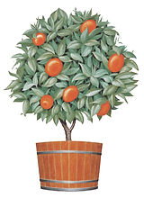 orange tree logo - color.jpg