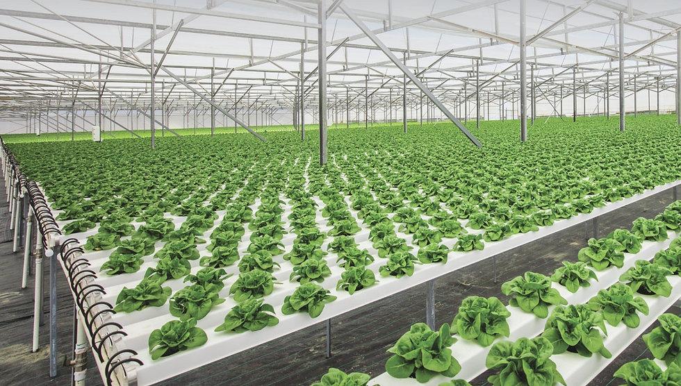 Sustainability-banner-little-gem-farm-hy