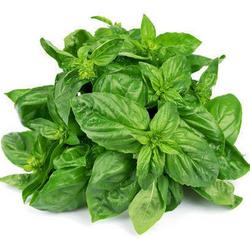 Basil Italian