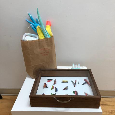 Crayon Morphology specimen box