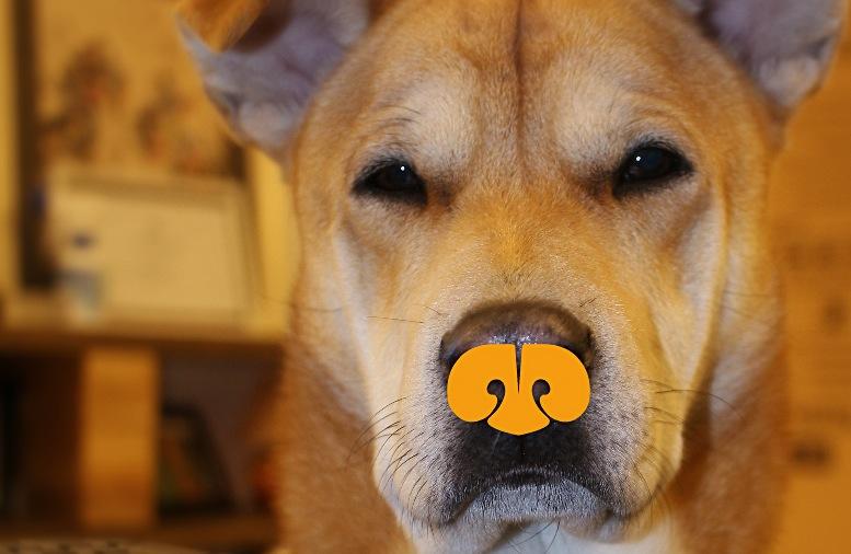 Where is my chews?