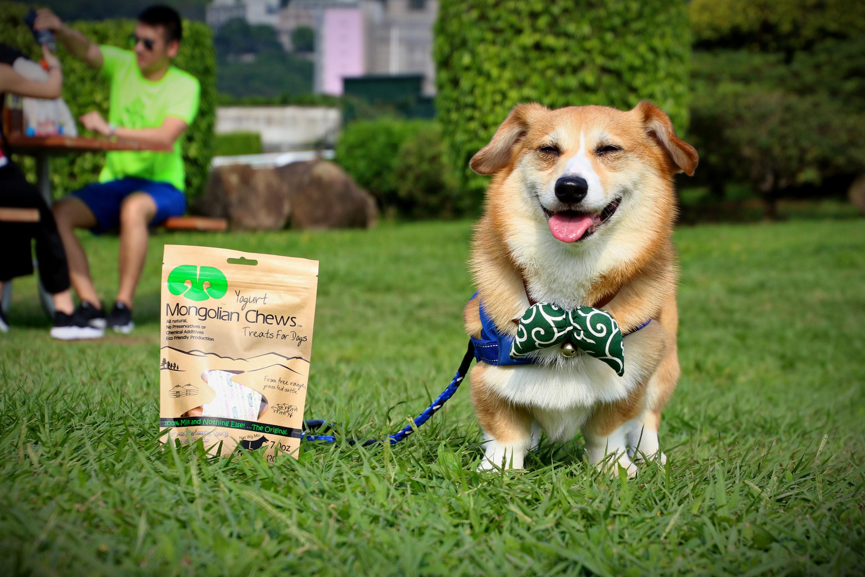 Mongolian Chews CORGI Yogurt for Dog