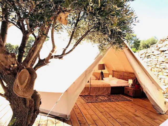 Olive tree tent.WEBP.jpeg