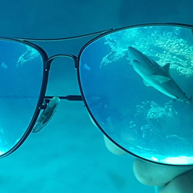 Artsy shark pic time!.jpg