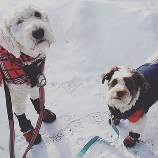 It's SO cold, the dogs had sweaters unde