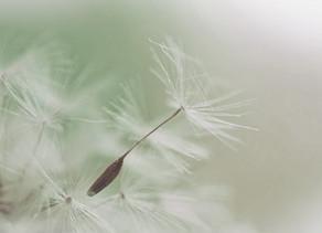 Disseminação de sementes