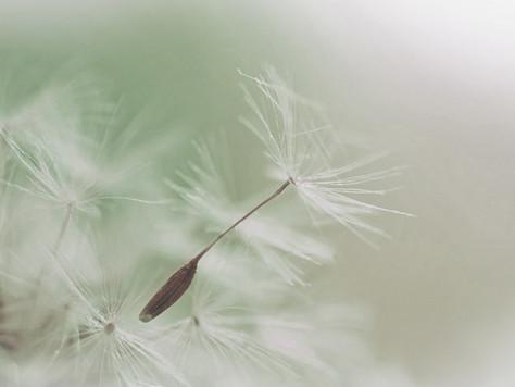The seed of Buddha