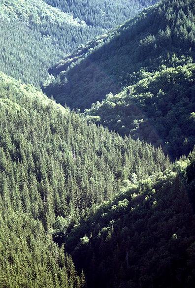 Trees Auvergne fav.jpg