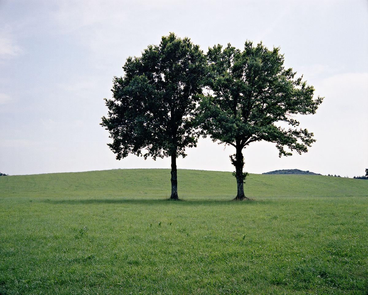 arbres du Périgord