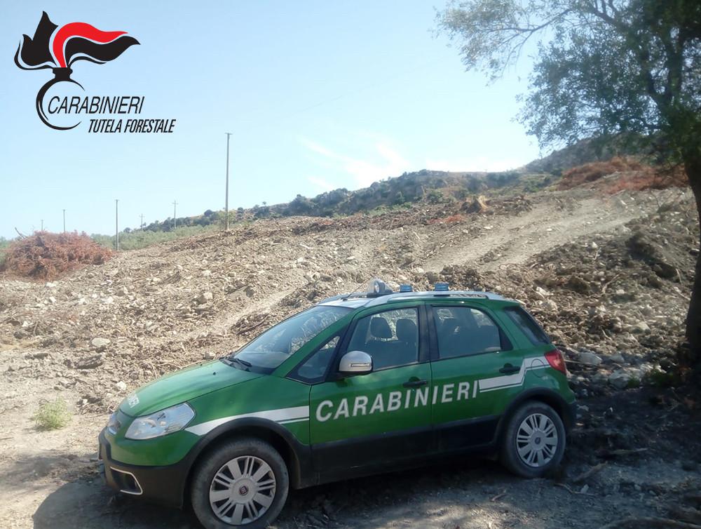 Paludi, carabinieri forestali, denunce