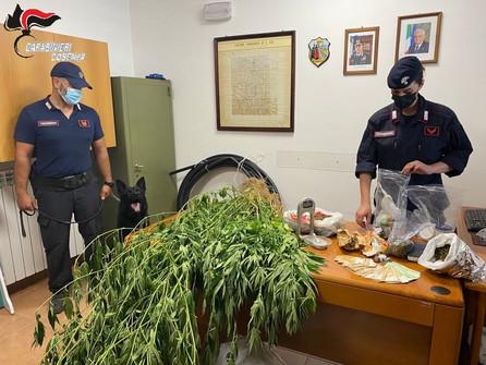 San Vincenzo La Costa: marijuana fra gli ortaggi. Fermato un coltivatore 50enne