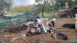 Rota Greca (cs). Sequestrata area agricola adibita a deposito di rifiuti.