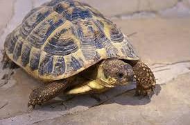 Cassano allo Jonio, tartarughe abbandonate sui binari a Sibari: salvate dalla polizia