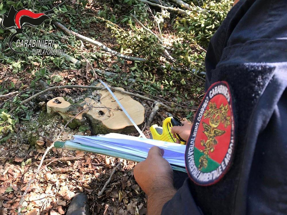 Rota Greca, taglio abusivo di alberi