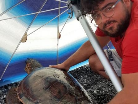 Grisolia, soccorsa in spiaggia una tartaruga caretta caretta