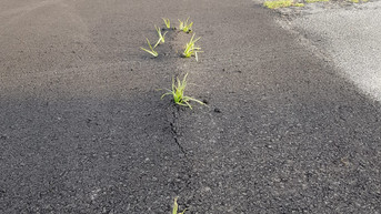 Scalea, nella nuova area fiere cresce già l'erba sull'asfalto. L'attacco di Orrico