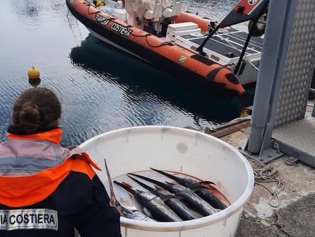 Pescespada sotto misura sequestrato dalla Guardia costiera di Maratea