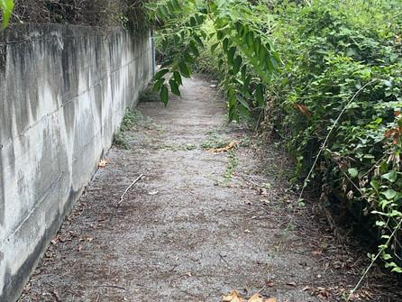 Scalea, pericolo: il sentiero verso la Petrosa invaso da erbacce e detriti