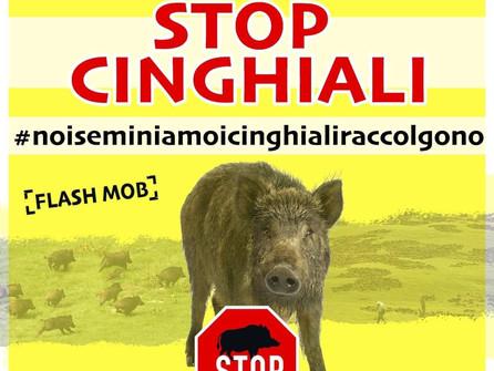 Stop cinghiali: manifestazione a Catanzaro con Coldiretti