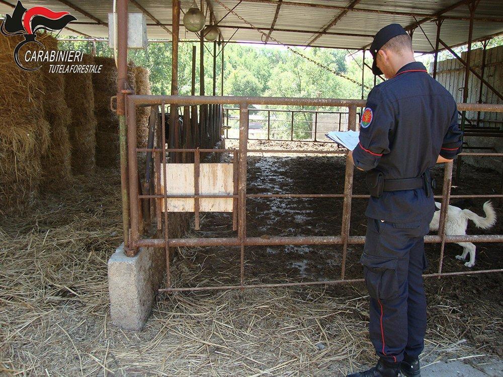Santa Domenica Talao, controlli all'azienda agricola