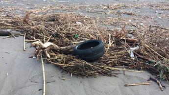 Praia a Mare, pulizia della spiaggia: Giornata ecologica con Italia nostra per il 28 dicembre