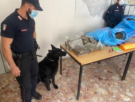 Cetraro, due arresti per detenzione di 11 Kg di marijuana