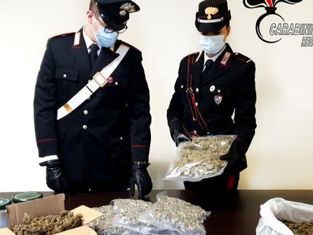 Taurianova, 1,8 Kg di marijuana nascosti nelle tende da campeggio: arrestato