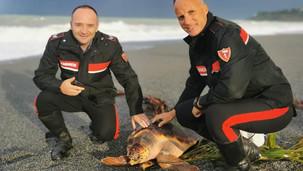 Scalea, salvata dai carabinieri una tartaruga caretta caretta