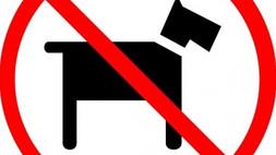 A Corigliano Rossano spiaggia vietata ai cani, ma non ci sono cartelli