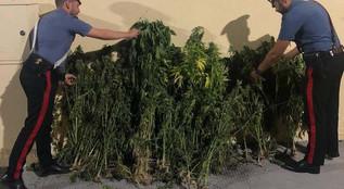 Crotone ed Isola Capo Rizzuto, tre arresti e una denuncia per droga