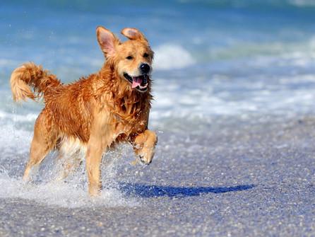 Estate al mare anche per gli animali: progetto sperimentale a Corigliano Rossano