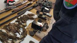 Turismo venatorio: otto persone denunciate e armi sequestrate a Castrovillari e Terranova da Sibari