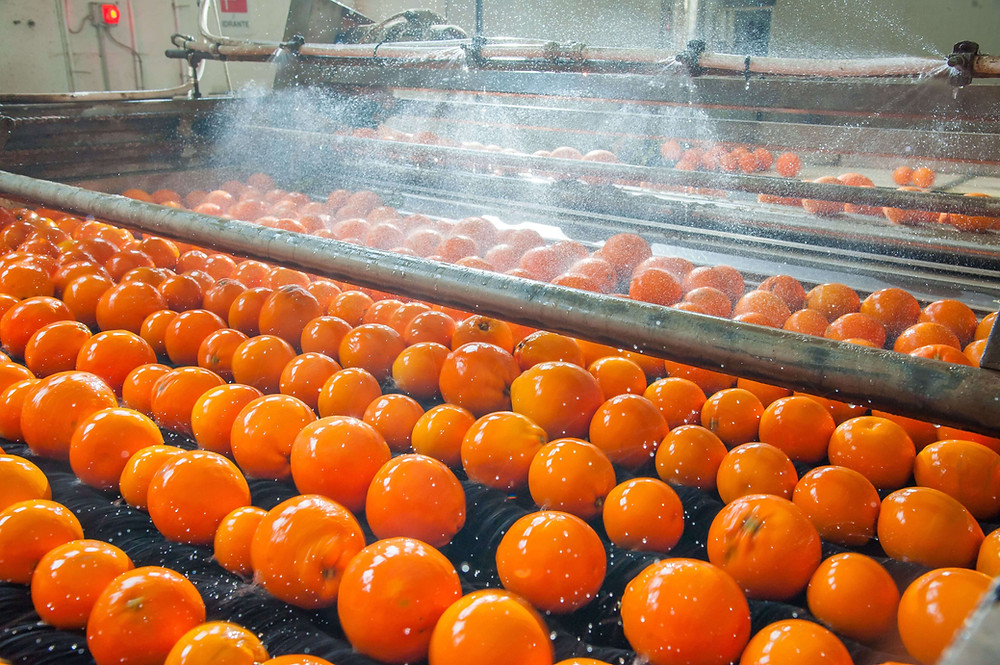 citruses being mechanically washed