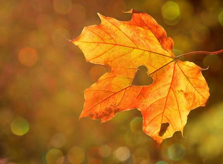 Bien préparer l'automne pour mieux vivre l'hiver prochain.