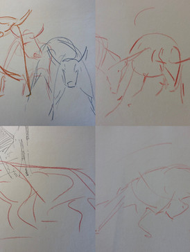 Sketches for bull