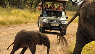 There are often elephant to be seen