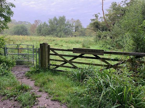 Dagley Lane Shalford meadows gate