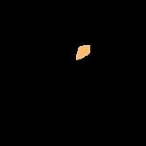 380_Wix_logo-512.png