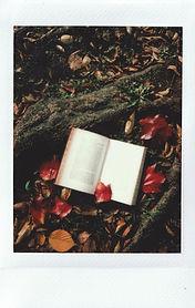 automne 2.jpeg