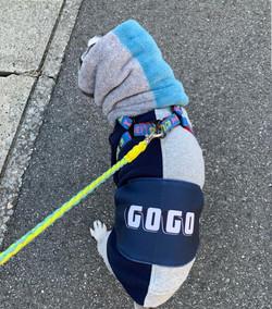 GOGOくん