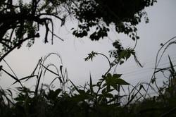 photograh