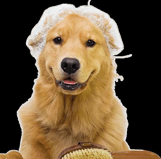 cachorro-estetica-petshop-veterinaria-pr
