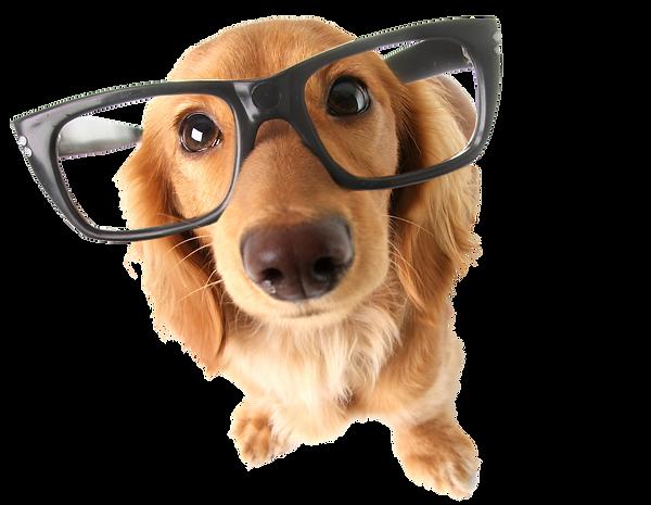 cachorros-mais-faceis-de-adestrar-1.png