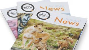 World Animal Protection | Tidningslayout