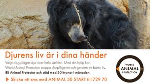 World Animal Protection | Kampanj