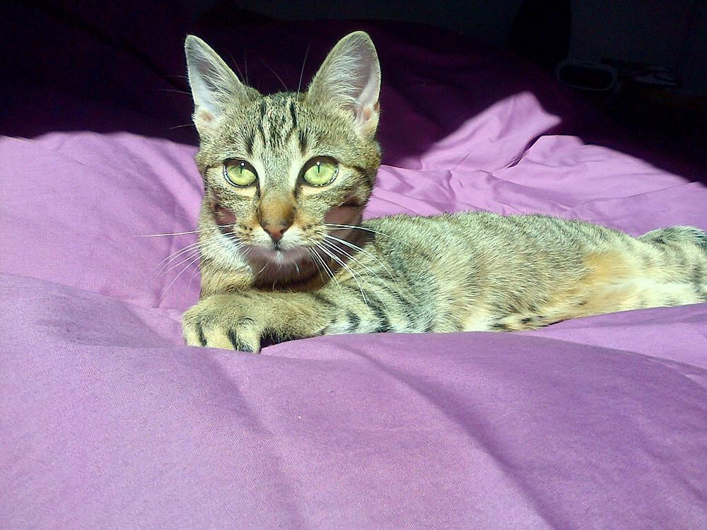 La jolie Melody...des yeux remplis d'or!