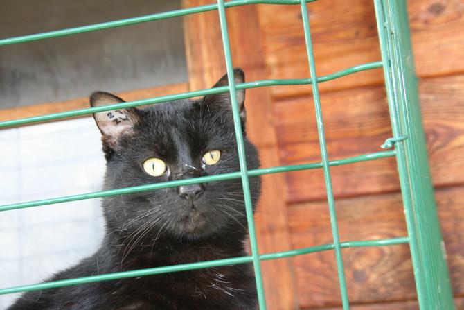 Jack...un chat un peu trop poilu!