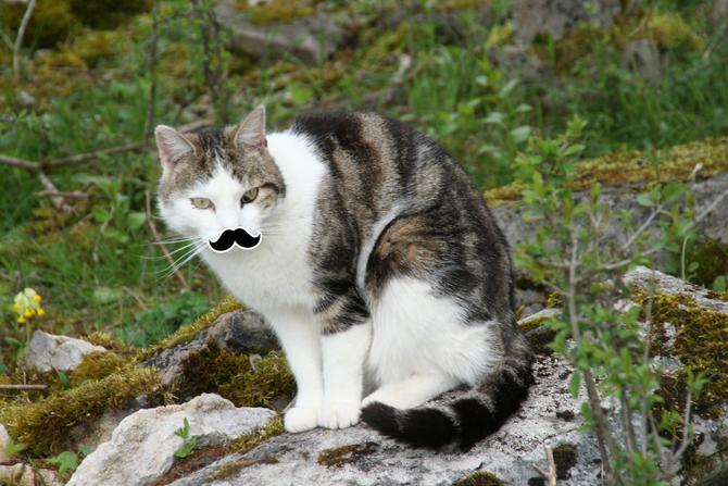 Appelez-moi El Mustachios!