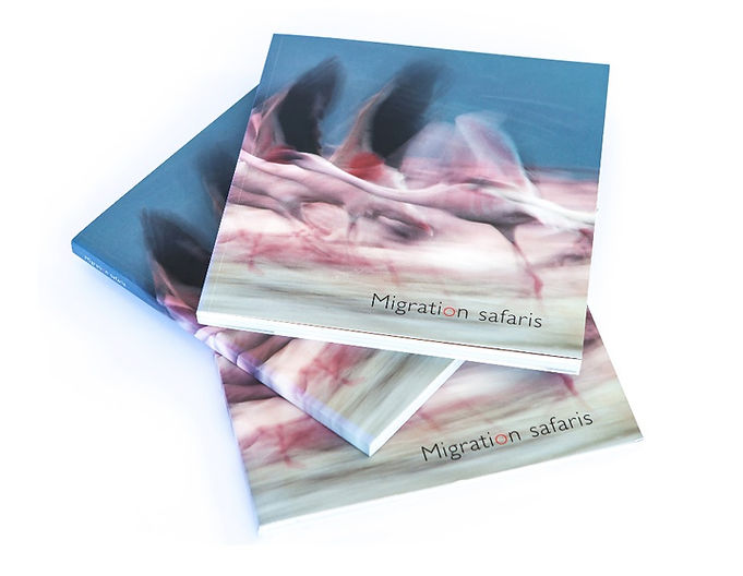 Migration Safaris brochure design, A Drewitt Design